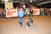 Willacy County - Pig Show - 01/29/2016