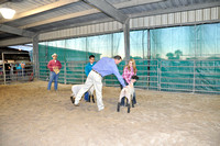 Willacy County - Lamb Show - 01/28/2016