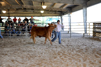 Willacy County - Heifer Show - 01/28/2016